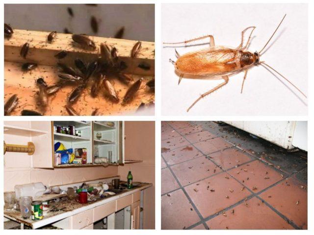 Как убить тараканов дома