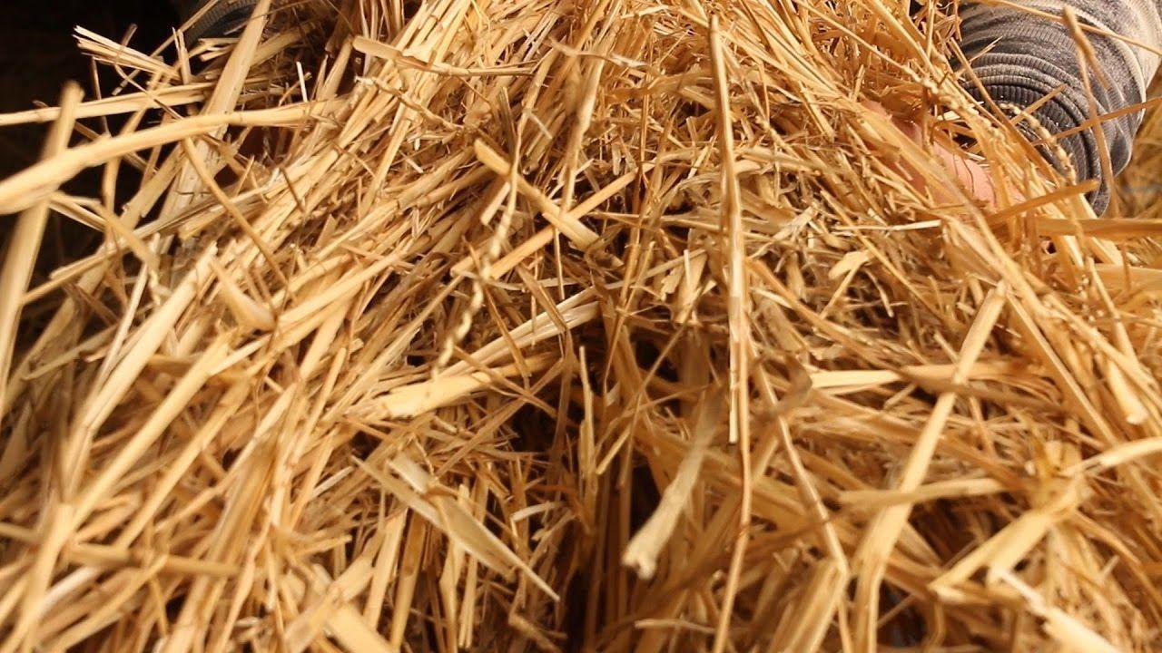 Использование соломы для производства биогаза