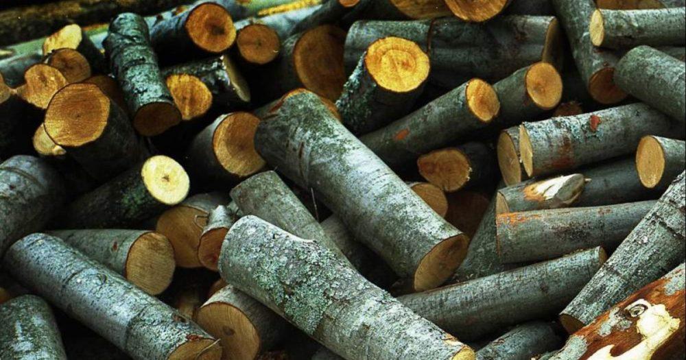 Фото 8. осиновые дрова как средство очистки