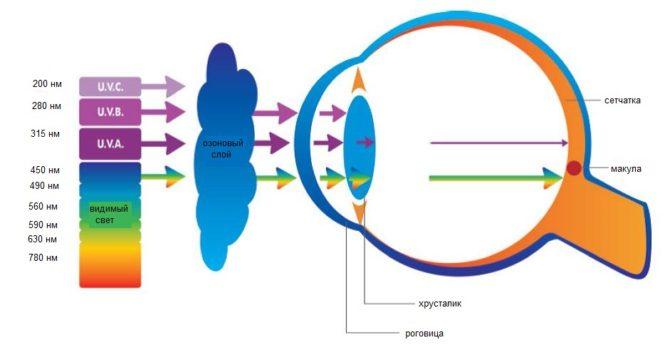 Пропускание ультрафиолета атмосферой, роговицей и хрусталиком