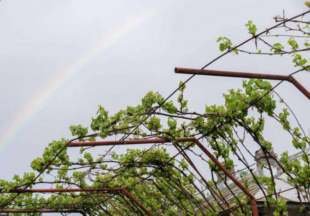 Возведение навеса для винограда своими руками