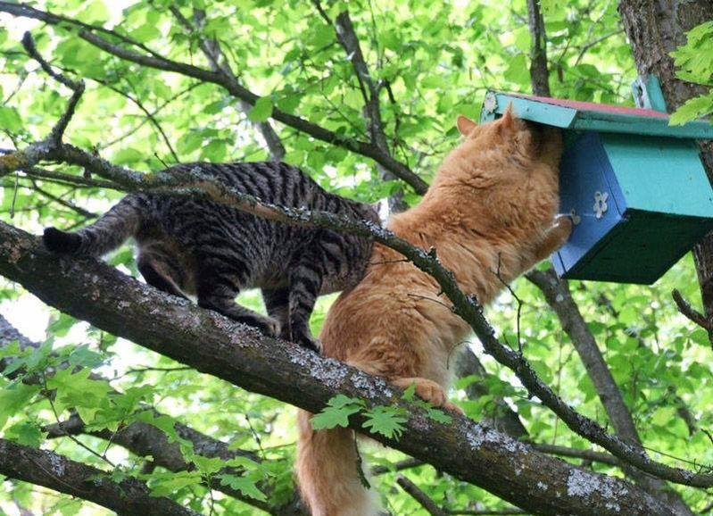 Важно позаботиться о защите птиц от кошек