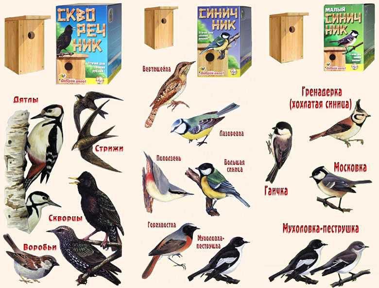 В каких скворечниках могут поселиться те или иные виды птиц