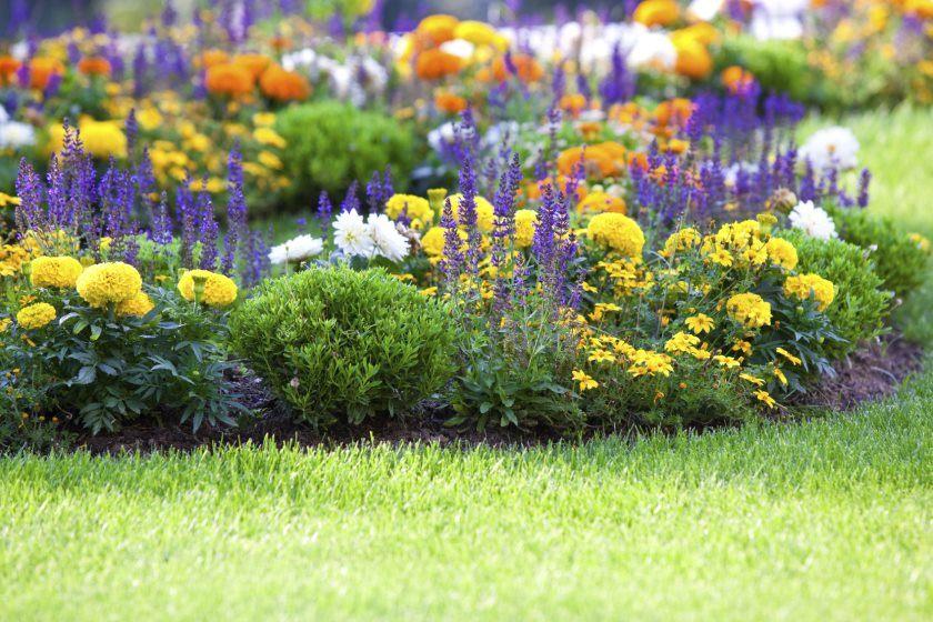 flower-garden2