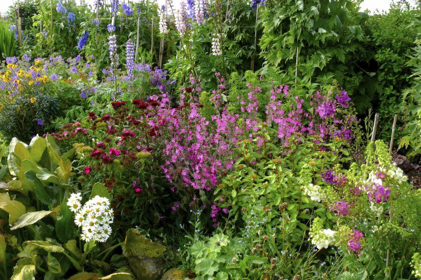 quaint-garden