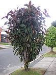 Bogota plant01a.jpg