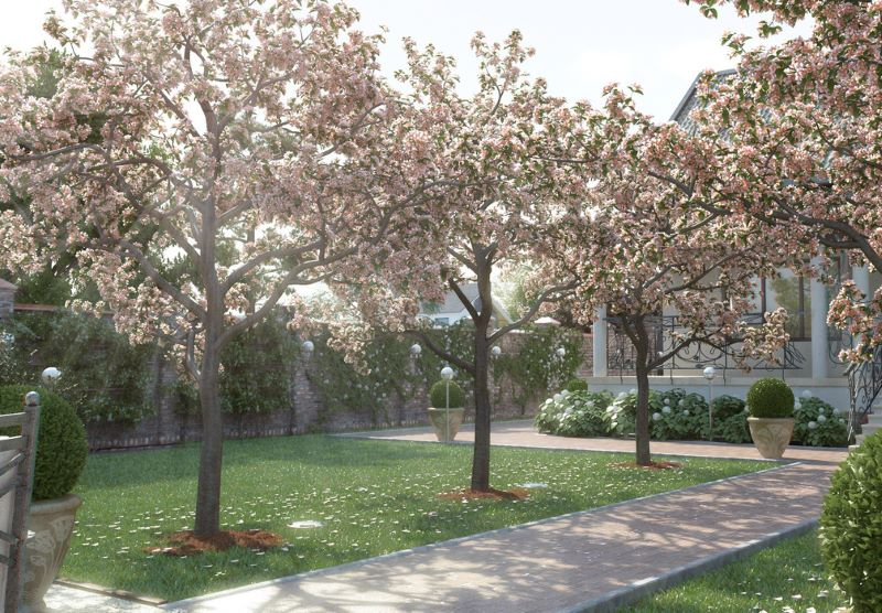 Фруктовые деревья вдоль садовой дорожки