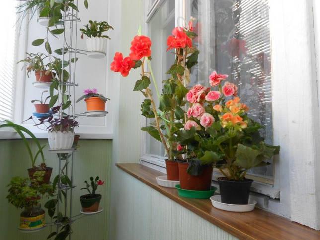 Как сделать стеллаж для цветов: напольный, на подоконник
